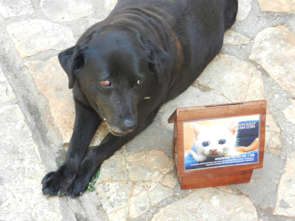 There are many collection boxes dotted around the shops and restaurants in Kalkan, please drop your spare change and donations into one of them.
