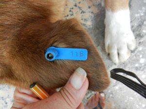 A canine ar tag
